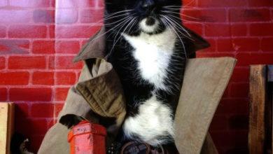 Photo of фотографий очаровательного кошачьего косплея, который вам захочется повторить со своим пушистиком